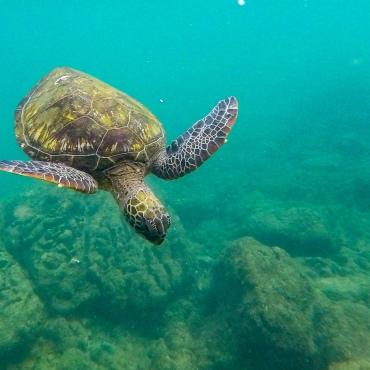 Superbe plongée avec cette tortue